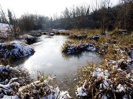 Le Volp sous la neige